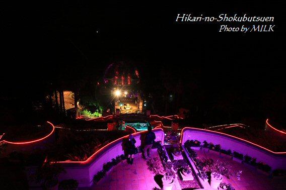 光の植物園_テラス紫.jpg