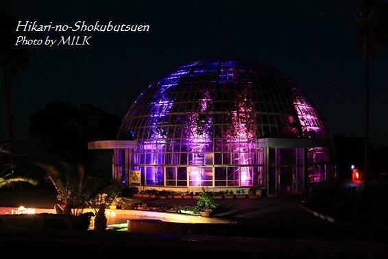 光の植物園_ドーム紫.jpg