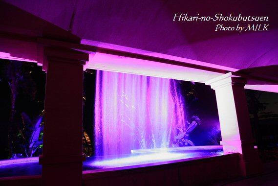 光の植物園_滝の裏.jpg