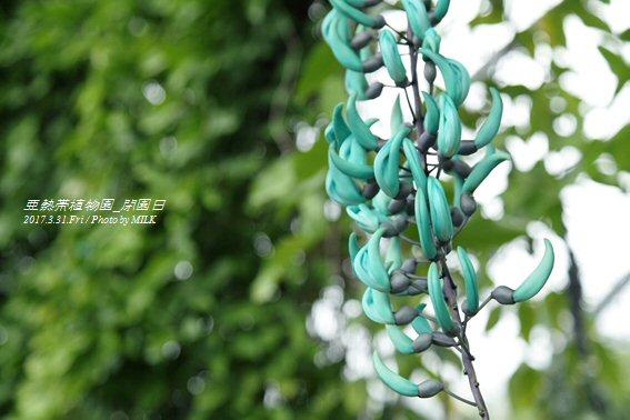 長崎県亜熱帯植物園閉園日11.jpg