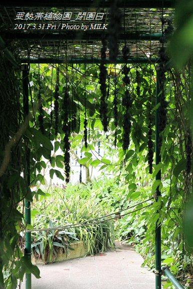 長崎県亜熱帯植物園閉園日14.jpg
