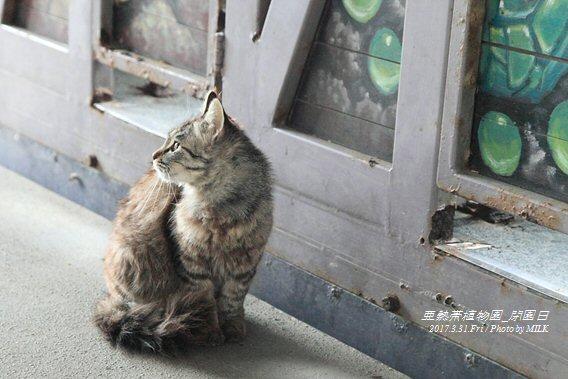 長崎県亜熱帯植物園閉園日43.jpg