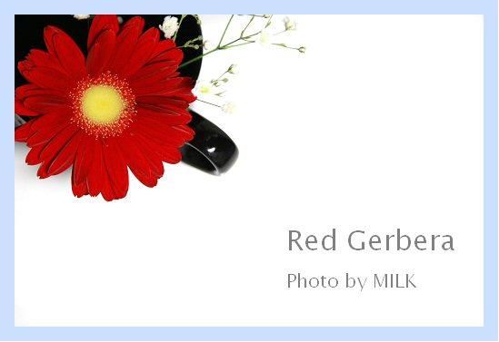 Red Gerbera1.jpg