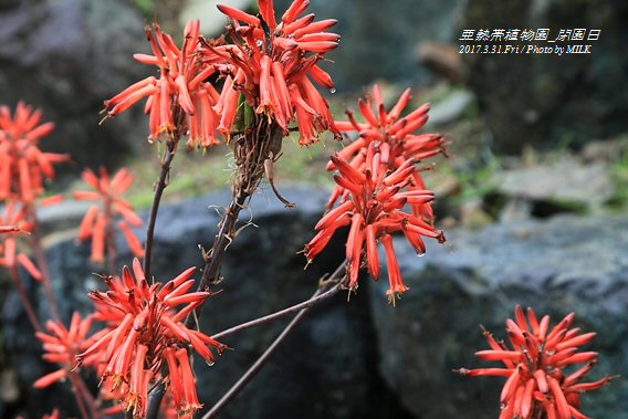 長崎県亜熱帯植物園閉園日5.jpg